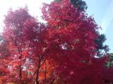 京都の紅葉・紅葉狩り 紅葉情報