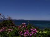 なにやらキレイな花と海と