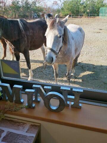 窓からの馬