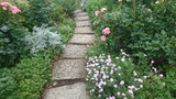 1イングリッシュローズの庭