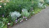 イングリッシュローズの庭2