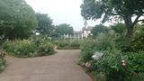 イングリッシュローズの庭3