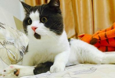 a2014-10-17omg-cat-funny-6