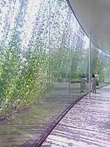 20070819_marubi_asagao2