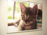 070220猫のタペストリー