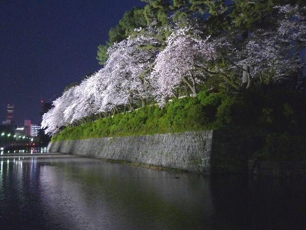 170414駿府公園-夜桜604