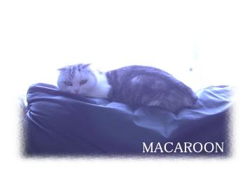 macarooon