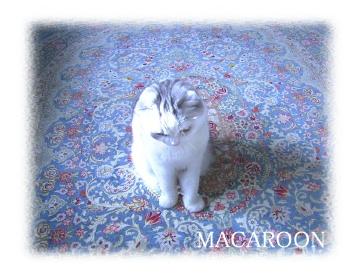 macaroon1