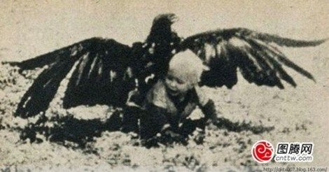 eagle-kidnap-kid-3