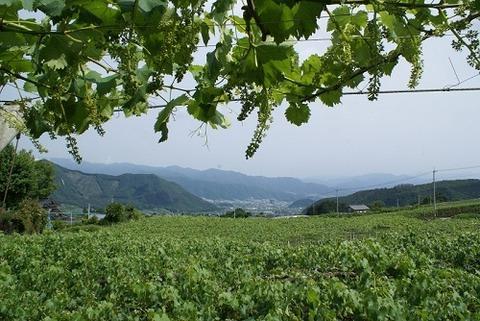 畑からの風景500