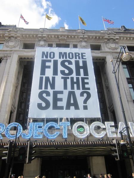 NO MORE FISH IN THE SEA ? at Selfridges
