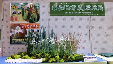 2015さぎ草栽培展 2