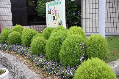 s-ほうきぐさ (2)