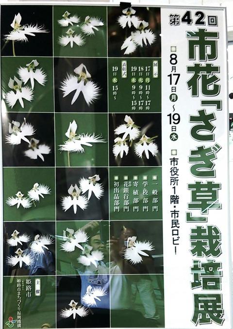2015さぎ草栽培展 1