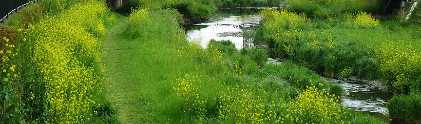 深大寺 野川の流れ