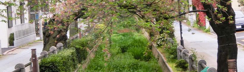 桜新町_呑川親水公園