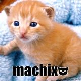 猫machix