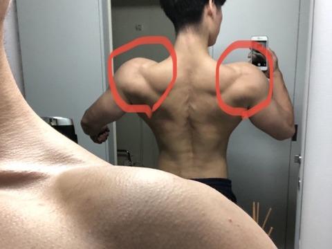フィジーク選手として非常に大切な三角筋の起始部の写真、ここの盛り上がりで肩幅に大きな差が生まれる