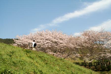 空・桜・緑