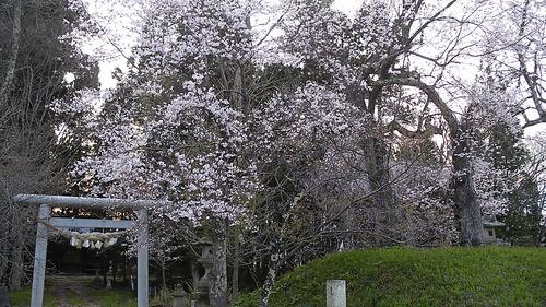 新山神社 (1)