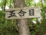 nanasigure011