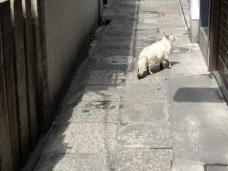 法善寺横町の猫
