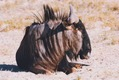 AFRICA BLOG, Part 1 - Photo 16