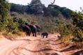 Botswana - Elephants 2