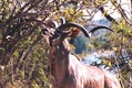 AFRICA BLOG, Part 1 - Photo 9