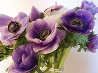 20 anemone-2