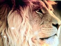 ライオン−1