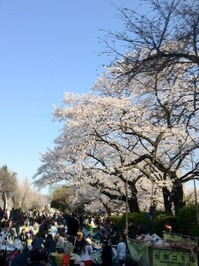 2012上野の桜