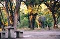 Botswana - Elephants 1