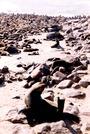 NAMIBIA - Cape Cross 7