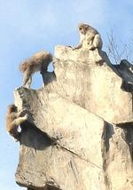 26 ueno zoo with momo&yuko-4