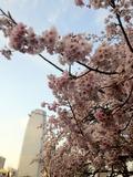 15 Tokyo Prince Hotel-1