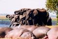 Botswana - Elephants 3