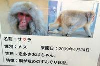 26 ueno zoo with momo&yuko-5