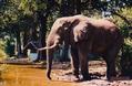 Botswana - Elephants 4
