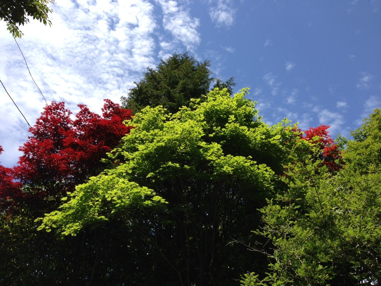 箱根の新緑