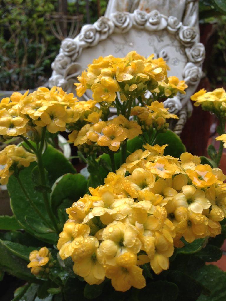 黄色い秋の花