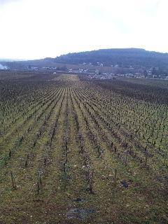 ブルゴーニュワイン畑2 シモンビーズ