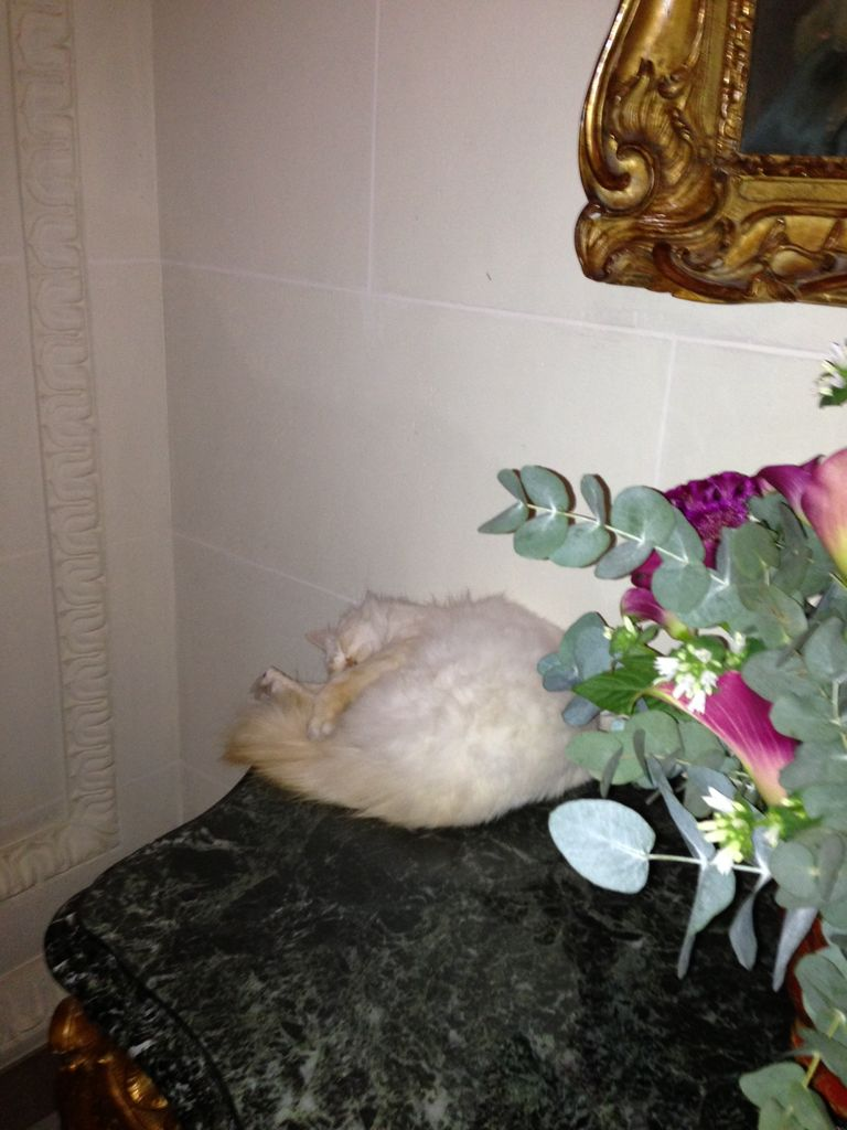 ブリストルの猫