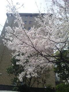 桜 都ホテル
