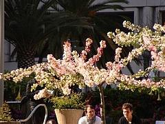 2009 Flowers in Berkeley_ 5