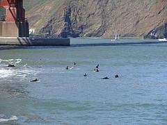 サンフランシスコ湾2009_ 3