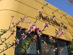 2009 Flowers in Berkeley_ 1