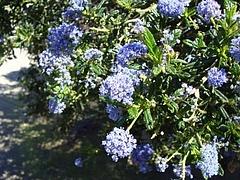 2009 Flowers in Berkeley_ 4