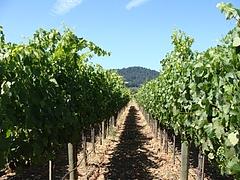 winery@sonoma, ca