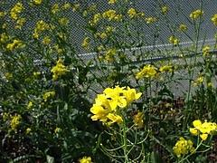 2009 Flowers in Berkeley_ 7